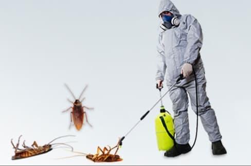 هل تستطيع مكافحة الحشرات المنزلية بمفردك؟